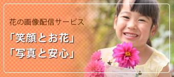 花の画像配信サービス  笑顔とお花